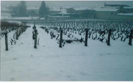 neige-vigne-beaujolais